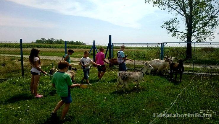 Edzőtábor - Jászboldogháza Ifjúsági Tábor - állatsimogató
